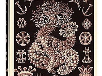 Bentley Global Arts Global Gallery Budget GCS-449757-1624-142 Ernst Haeckel Nature Illustrations: Sea Cucumbers-Rose Tint Gallery Wrap Giclee on Canvas Wall Art Print