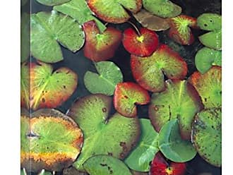 Bentley Global Arts Global Gallery Budget GCS-452064-1824-142 Tim Fitzharris Yellow Pond Lily Floating On Water Surface North America Gallery Wrap Giclee on Canvas Print Wall Art