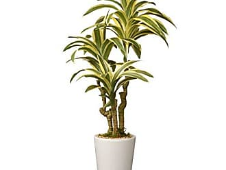 National Tree Company National Tree 21 Inch Garden Accents Green Dracaena Plant in Ceramic Pot (GAD30-21G)