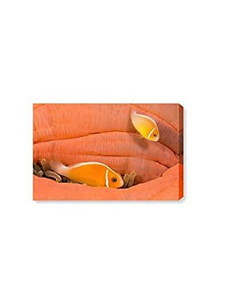 The Oliver Gal Artist Co. The Oliver Gal Artist Co. Oliver Gal Peach Anemonefish by David Fleetham Orange Sea Animals Wall Art Print Premium Canvas 36 x 24